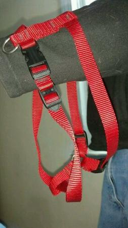 Nylon Dog Leash ,collars and Harnesses  all colors and sizes