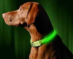 Illumiseen LED Dog Collar USB Rechargeable Neon Green