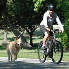 Bicycle Pet Dog Leash Dog Chain Dog Rope For Pet Leashes Han