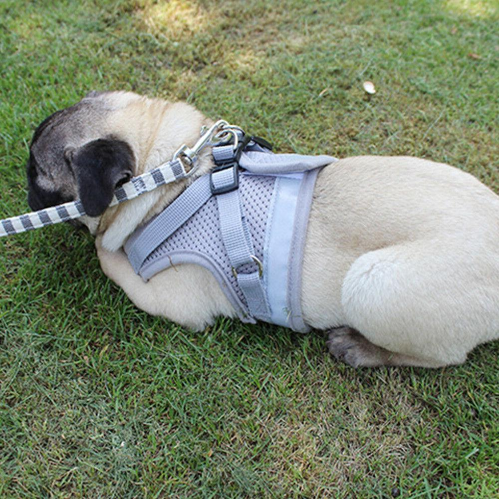 Small Dog Breathable harness chest XXS-L set