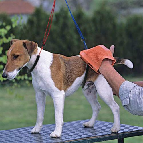 Dog Grooming LIE Leash for Table Arm