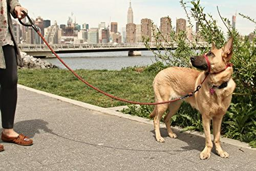 Dog Leash by - Duty and 100% for Night for Medium Large Sized Breeds Mountain Climbing Ergonomic Grip