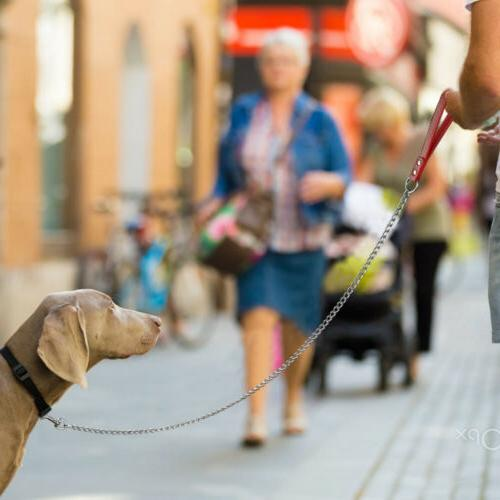 Dog Leash Leads with Duty Strong Leashes