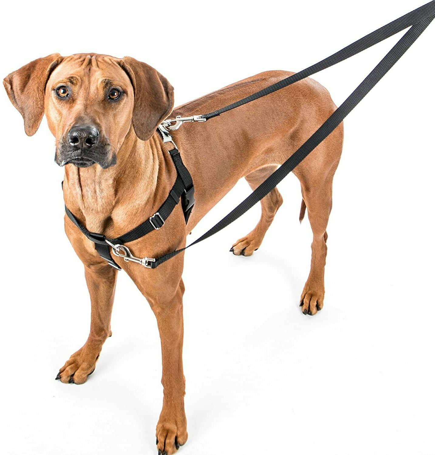2 Hounds Design Freedom No-Pull Dog Harness & Leash Package