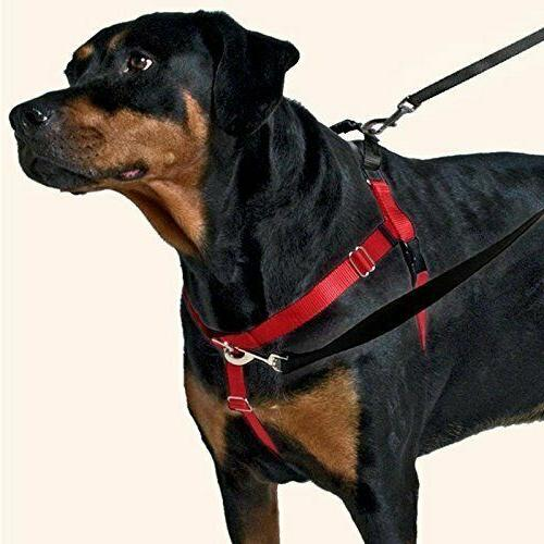 freedom no pull dog harness with leash