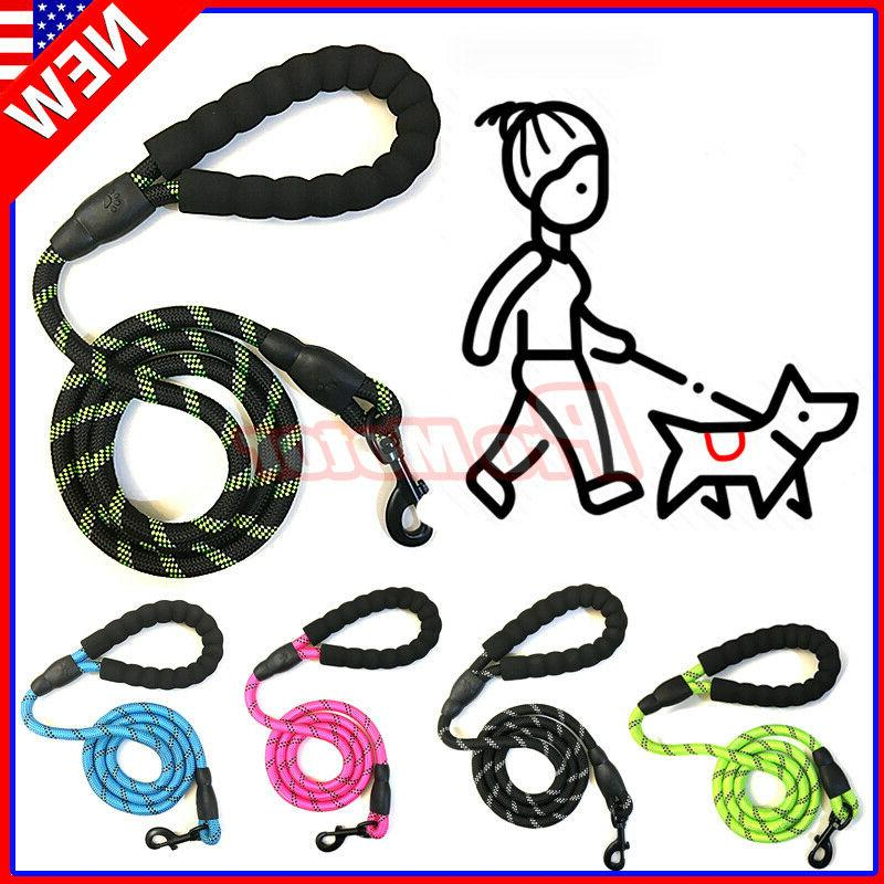 large dog puppy walking hiking lead