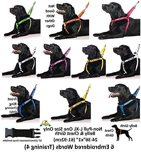 BLIND DOG Friendly Dog 4ft/1.2m By Others Your Dog Advance Award Winning