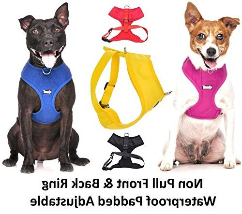 NERVOUS 2 4 Foot Padded Dog Leash Accidents Advance
