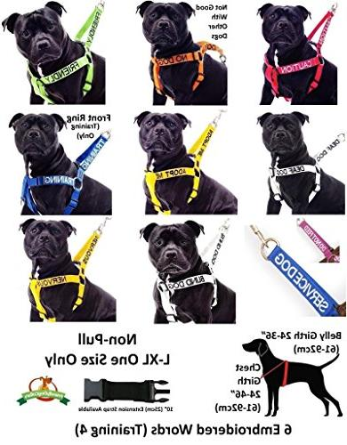 TRAINING Color 2 4 Or Leash Warning Others of Dog in